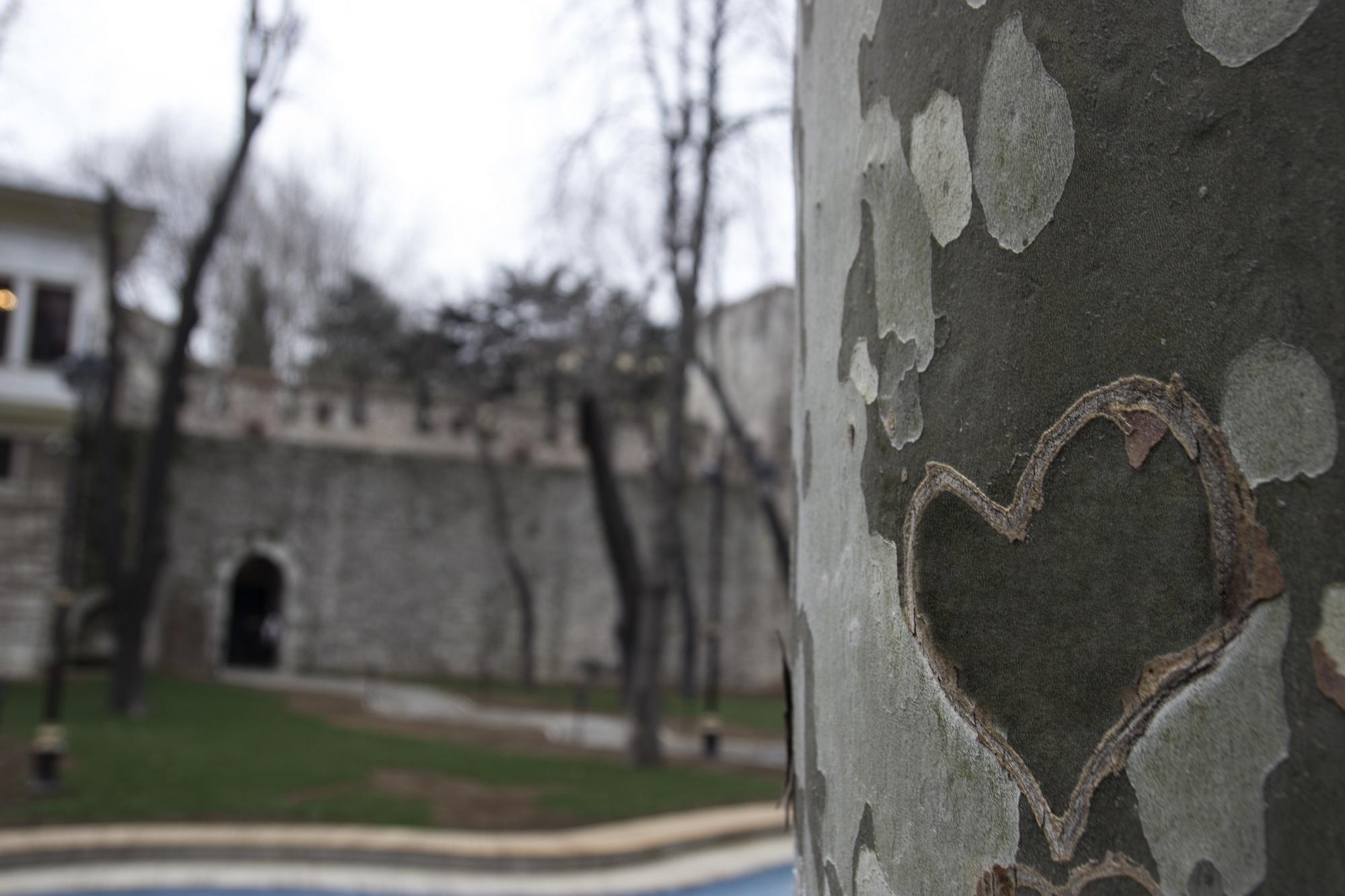 gülhane parkı, ceviz ağacı